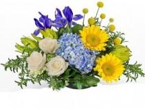 The Provencal Cut flowers