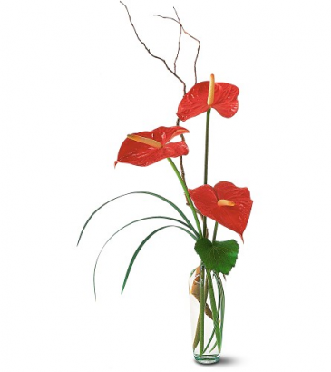 The Simplicity of Anthuriums