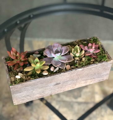 The Succulent Box Arrangement