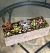The Succulent Box Arrangement