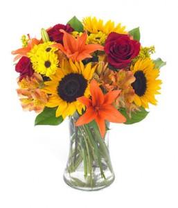 The Sun Flower Fall Flowers