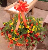 The Sunshine Basket Hanging Basket