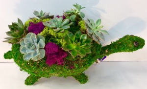 The Tortoise and The Succulent  in Troy, MI | DELLA'S MAPLE LANE FLORIST