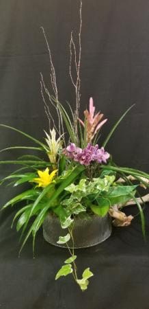 The Tropical Garden Dish Garden