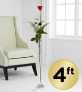 The Utimate Rose 4 ft Tall