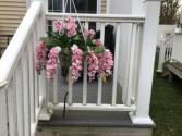 Think spring Hanging wisteria basket
