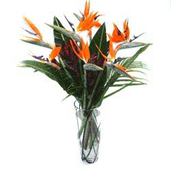 THIS WEEKS SPECIAL! *While supplies last Stunning Exotic Birds of Paradise In Vase in Margate, FL | THE FLOWER SHOP OF MARGATE
