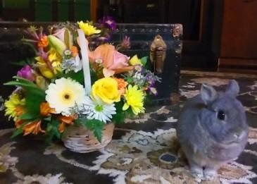 Thistles easter basket basket in melbourne fl violets in bloom thistles easter basket basket negle Gallery