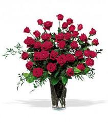 Three Dozen Ecuadorian  Roses Vase Arrangement Ecuadorian  Long Stem Roses baby's Breath & greens