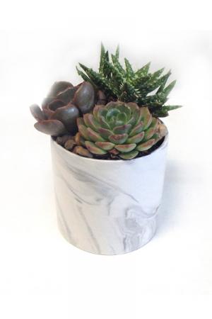 Desk Top Succulents