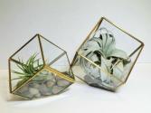 Tillandsia Cubes Air Plants
