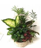 Timeless Garden Dish Garden  Assoreted Plants