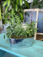 TIN OF HERBS Herb plants