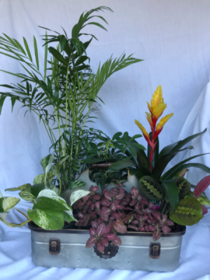 Tin Planter Houseplant Planter in Longview, WA | BANDA'S BOUQUETS