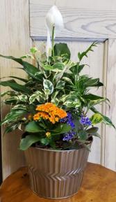 Tin Planter Plants