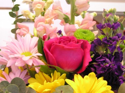 Tioga Special Mixed Assorted Spring Flowers