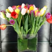 TIPPY TOP TULIPS Full of beautious tulips!!