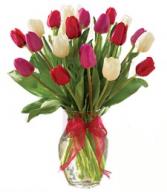 Tiptoe through the Tulips Two Dozen Tulips