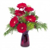Winter Gerbera Fresh Flower Arrangement