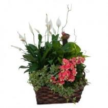 Living Blooming Garden Basket Plant Arrangement