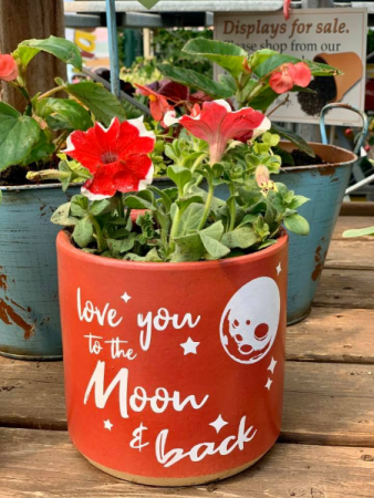 To The Moon  Potted Annual