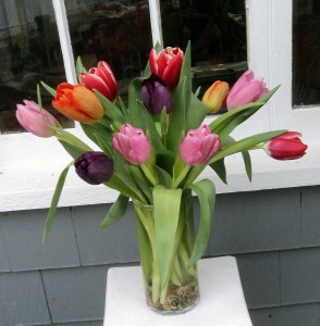 Totally Tulips Vase Arrangement in North Adams, MA | MOUNT WILLIAMS GREENHOUSES INC
