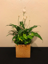 Touch of Elegance Ceramic Planter Dish Garden