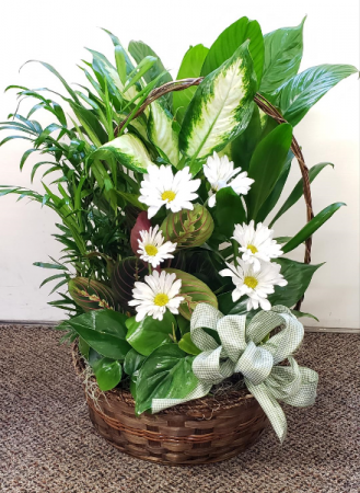 Traditional European Dish Garden in a basket Plants