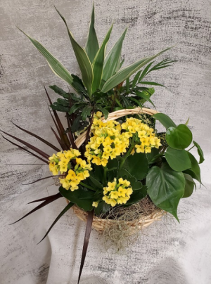 Traditional Plant Basket  in Croton On Hudson, NY   Cooke's Little Shoppe Of Flowers