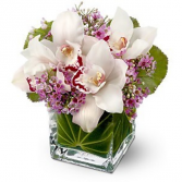 Tranquil Orchids Cube of Orchids and waxflower