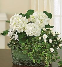 Tranquil White Garden