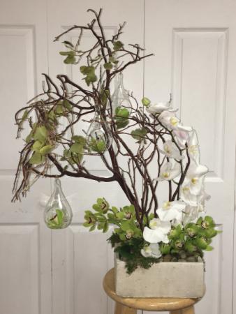 Transcendent Collection Zen orchid teardrop Garden