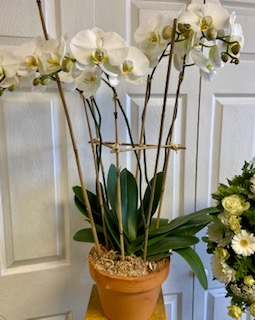 Transcendent Memorial collection Orchid sympathy , any