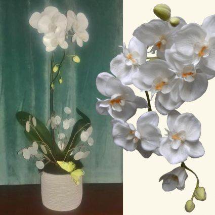 Transformation Orchid Condolence Gift