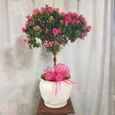 Tree Azalea in Ceramic