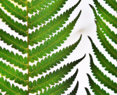 Tree Fern & Leather Leaf Greenery Assortment