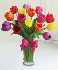 TRENDY TULIPS Rainbow of Tulips
