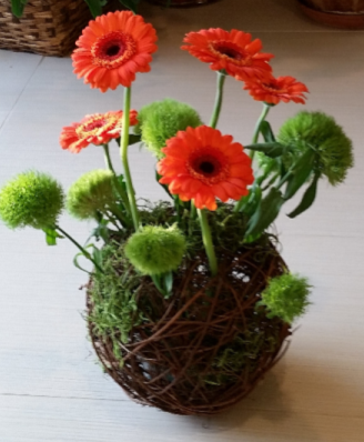 Daisy Surprise Flower arrangement