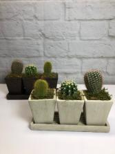 Trio Cactus Planter in Neutral Pottery