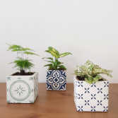 TRIO OF PLANTS Potted Plants
