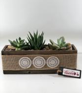 Trio of Succulents  Dish Garden of Succulents