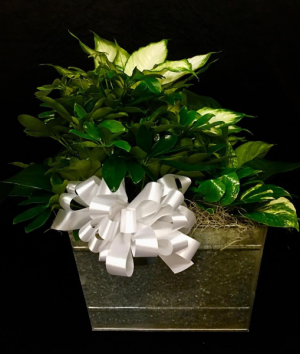 Trio-Plant Garden Designed in Galvanized Bucket with Rope Handles in Plainview, TX | Kan Del's Floral, Candles & Gifts