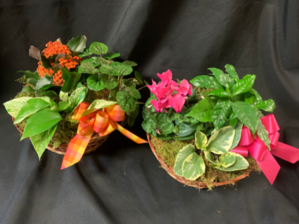 Trio Planter Garden