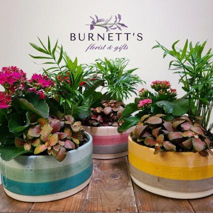 Trio Stripe Planter Planter
