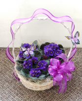 Trio Violet Basket  Plants