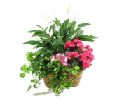 Triple Basket Plants