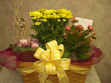 Triple Bloomer Blooming basket