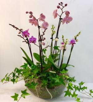Triple Orchid Garden  in Troy, MI | DELLA'S MAPLE LANE FLORIST