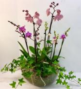 Triple Orchid Garden