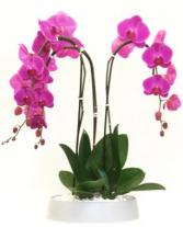 Triple Orchids Planter Dish